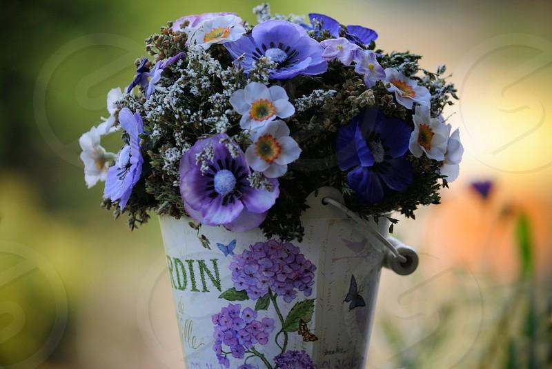 purple full bloom flowers on white steel bucket during daytime photo
