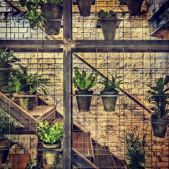 Plants pots Farmstand London restaurant cafe photo