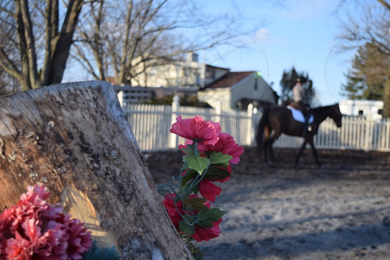 close-up photography of red petaled flower near brown horse at daytime photo