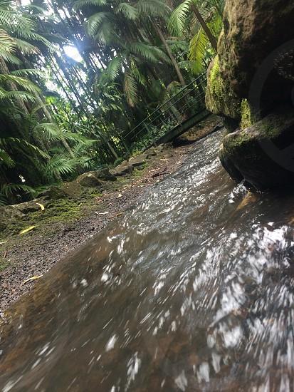 Mt Tambourine Nature Beautiful photo