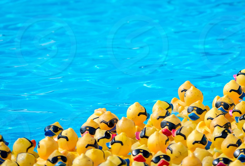 yellow floating duck with black googles in swimming pool photo