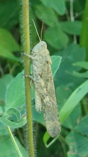 Green grasshopper insect outdoors summer bugs green photo