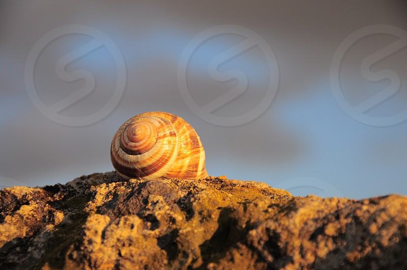 brown and white snail shell photo