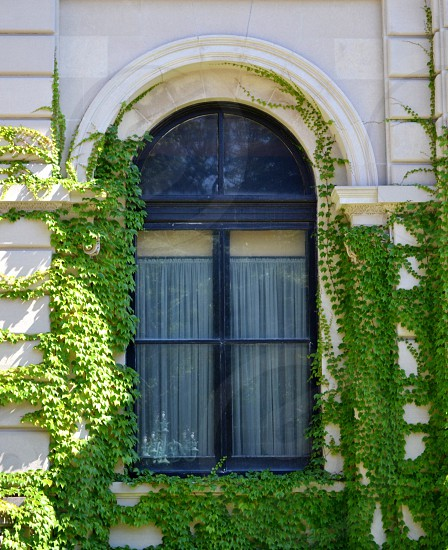 green vines on white wall photo