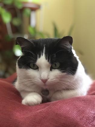Ecologia Tram George Eliot camzone tappi 猫arrivato ancelotti -  stradedicoraggio.it