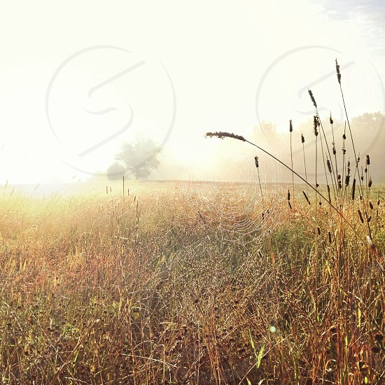 brown grass and foggy photography photo