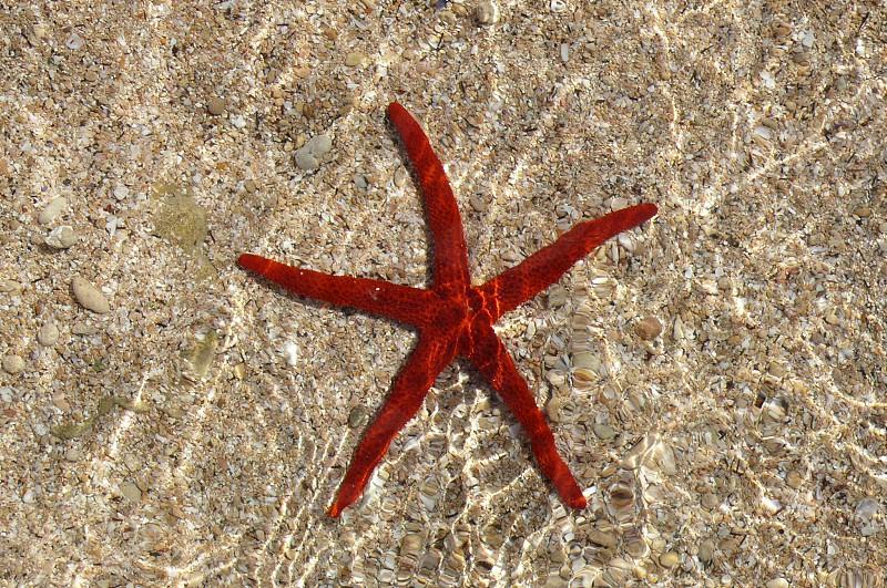 marine star photo