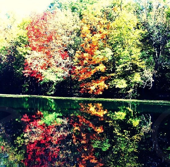 multicolored tree leaf near body of water at daytime photo