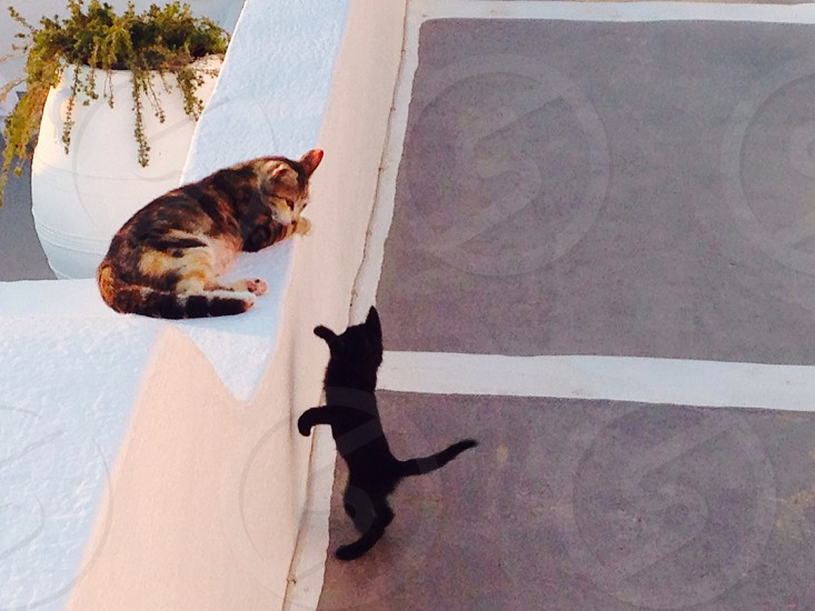 cats at santorini photo