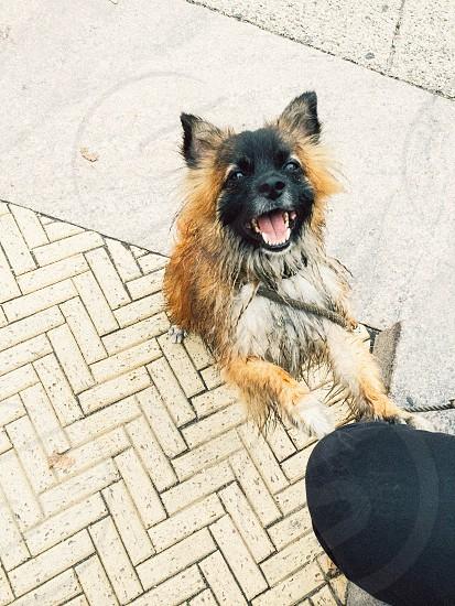 Dog wants attention dog wet sidewalk photo