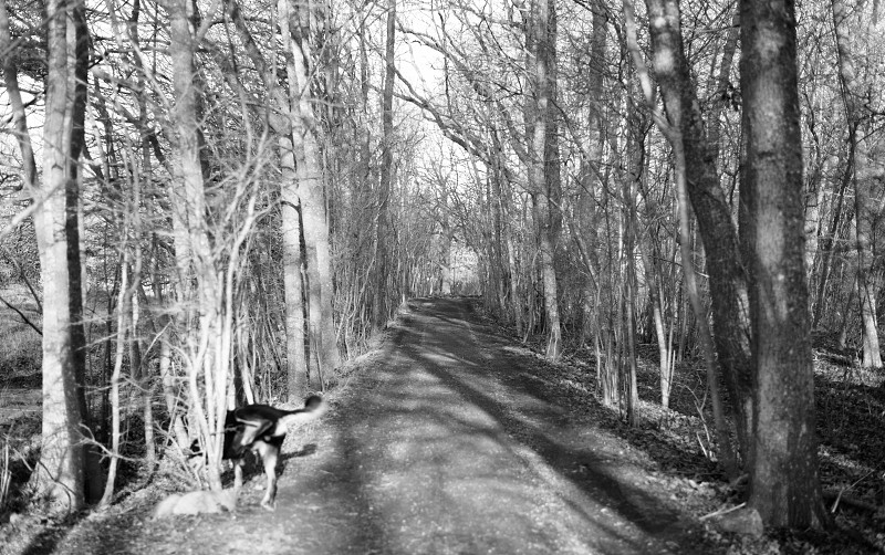 b & w photography of dog inside forest photo