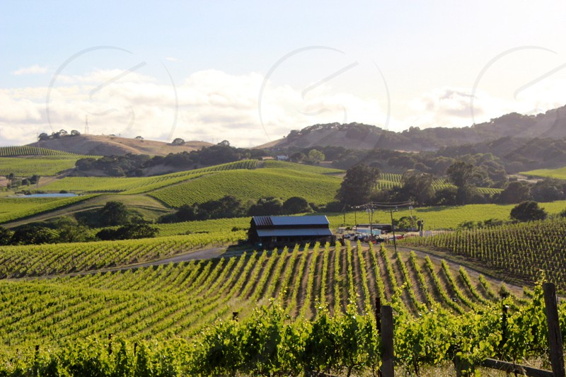 house with vineyard photo
