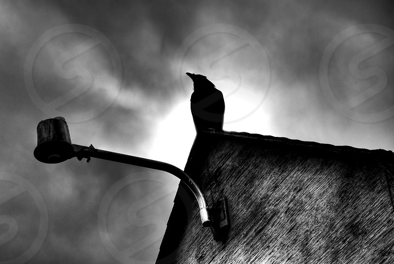 The Raven sits perched upon the rooftop. photo