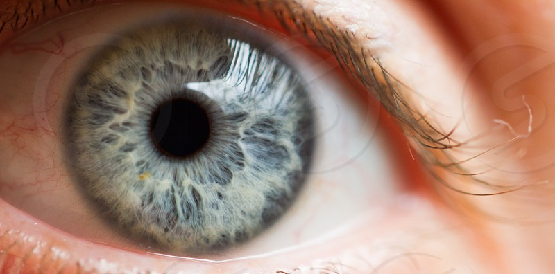 blue eye eye close up eyelids eyelash iris cornea retina lens pupil photo