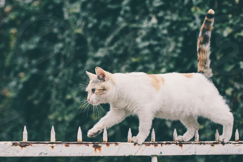 Cat walking on fence photo