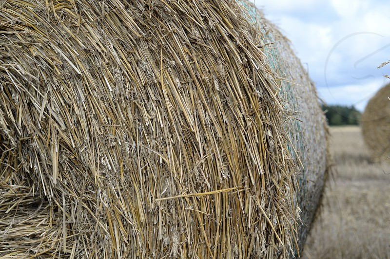 hay straw lines harvest hay bales photo