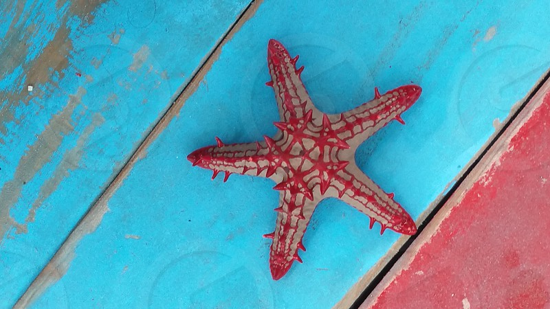star fish on teal wooden top photo