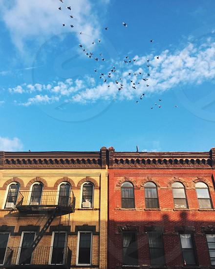 Brooklyn brownstones and flock of pigeons. photo