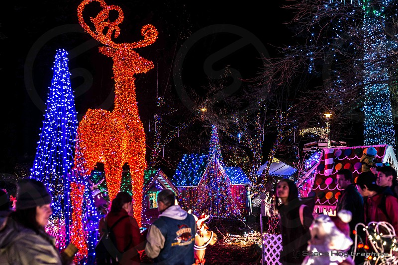 Majestic Rudolph photo