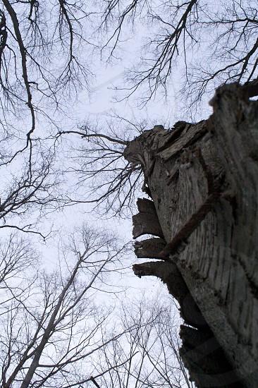 tree bark branches branch sky photo