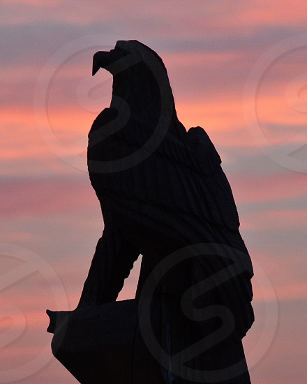 Sunset Eagle on July Fourth photo