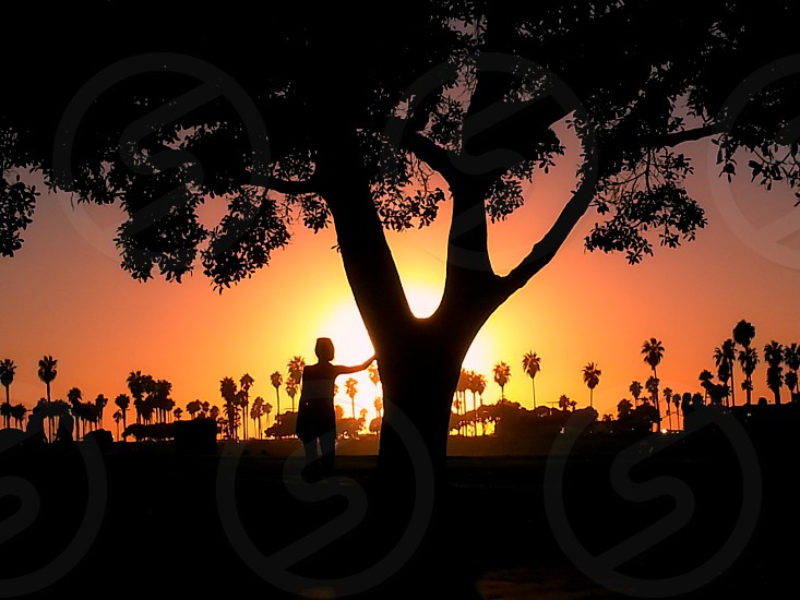 A beautiful girl and tree silhouette set aglow in the light of the afternoon light. photo