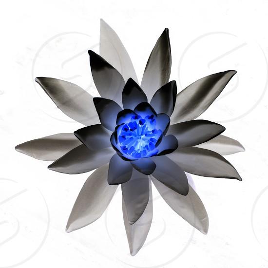 X-ray flower photo