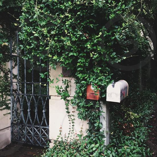 Love Letter to Charleston. photo
