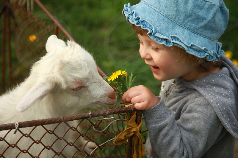smiling girl in gray hoodie holding yellow flowers near white goat kid behind brown cyclone wire fence during daytime photo