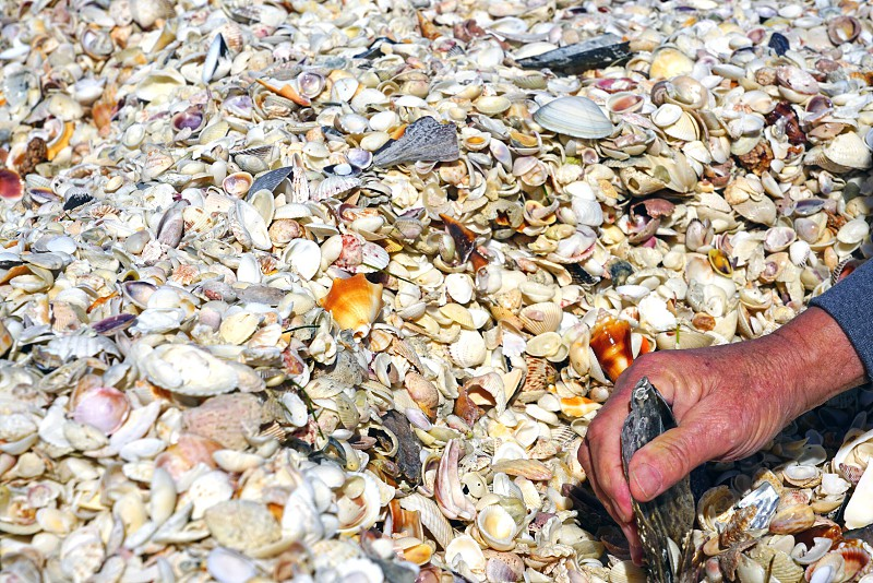 Shell dig digging collect mollusk beach hand photo