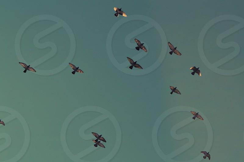 Birds above Sante Fe New Mexico Flying Blue Sky photo
