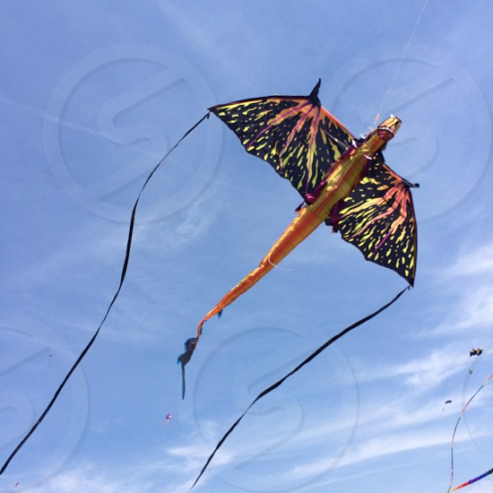 black and brown dragon design kite photo