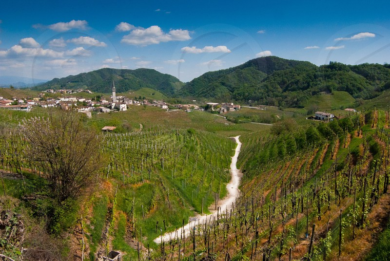 houses and grape fields with rolling hills photography photo
