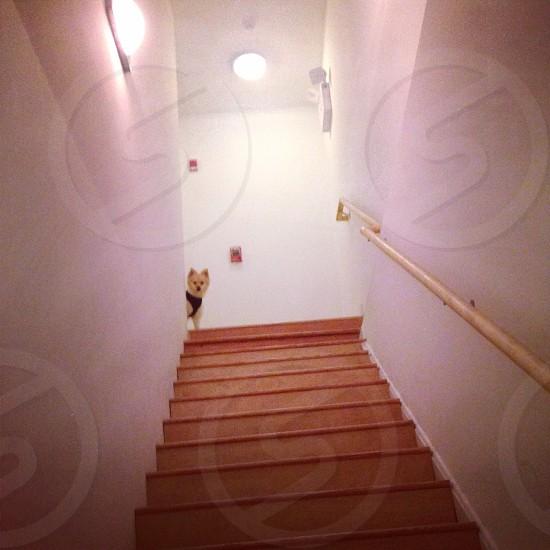 Stairwell dog white photo