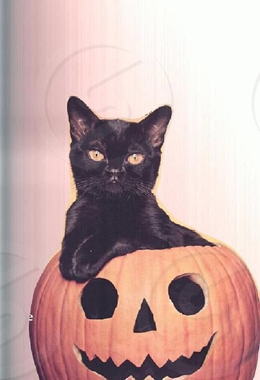 My cat in our pumpkin  photo