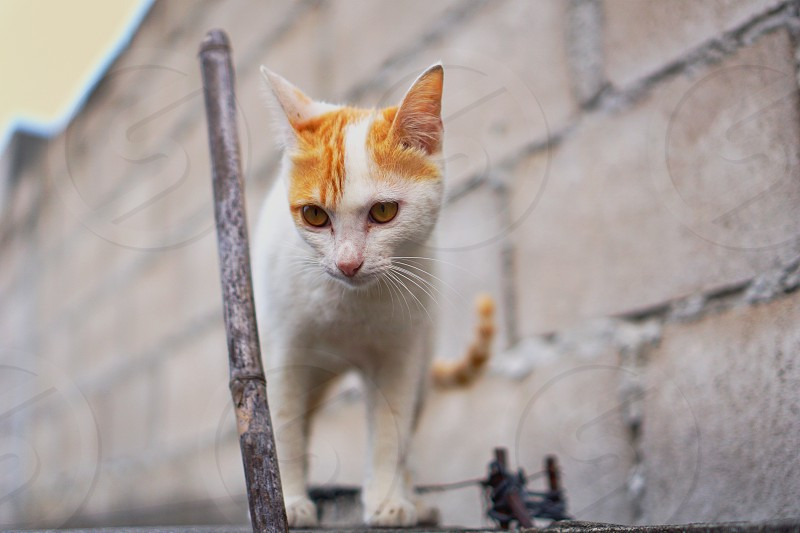 portrait of cute cat looking down on brick wall photo