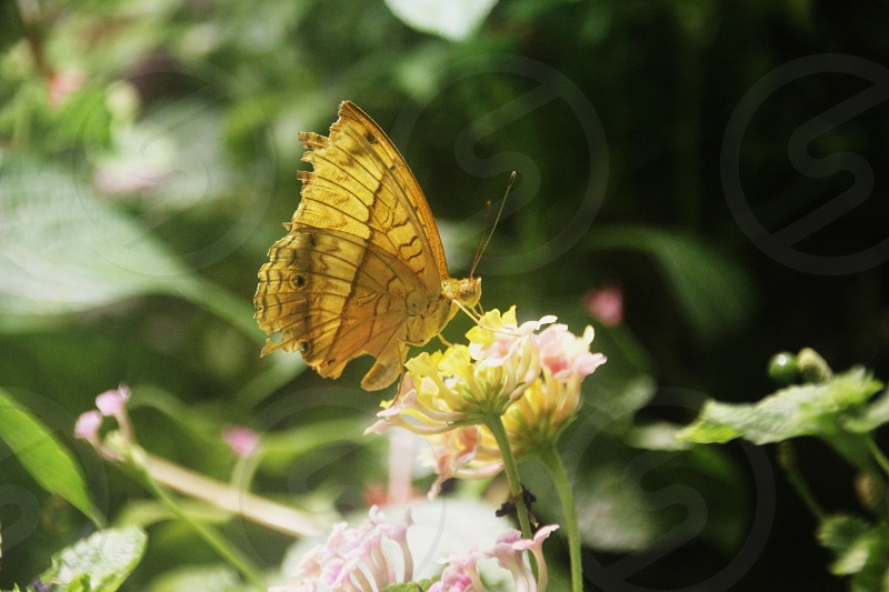 Close up photo of a butterfly. photo