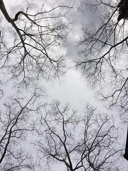 Trees NYC 2014 photo