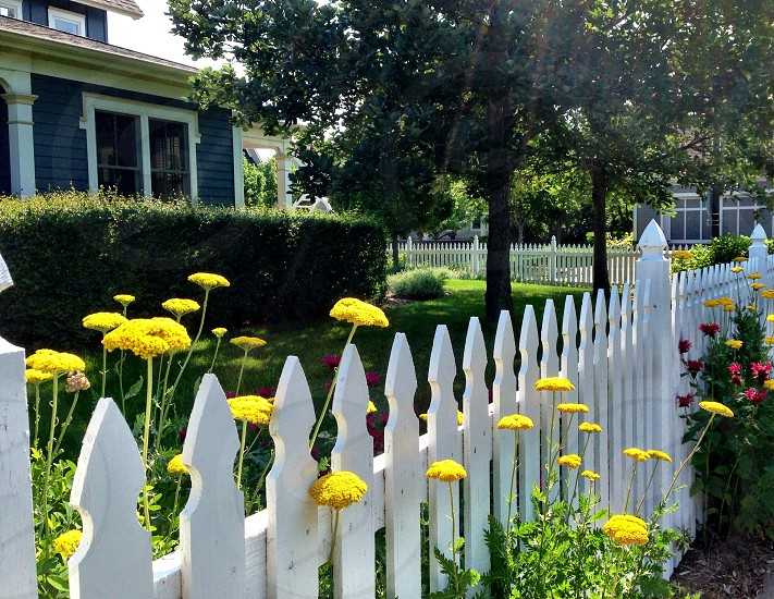 adorable picket fence with tall yellow flowers photo