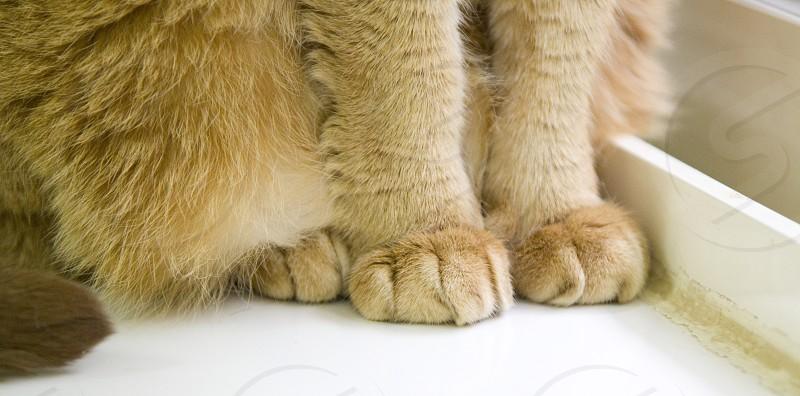 Cat paws (Taipei Taiwan) photo