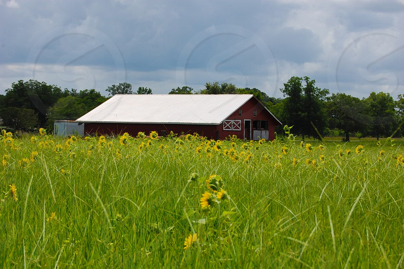Headland Alabama photo