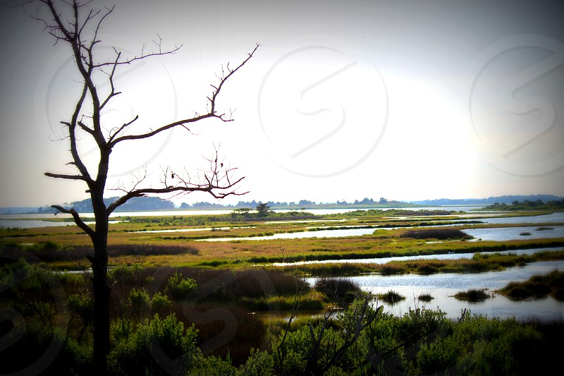 Maryland Marsh photo