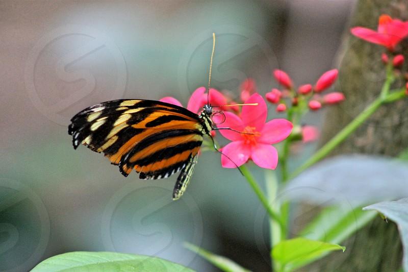 butterfly pink flower orange spring photo