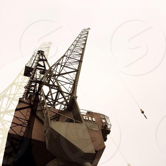brown crane photo