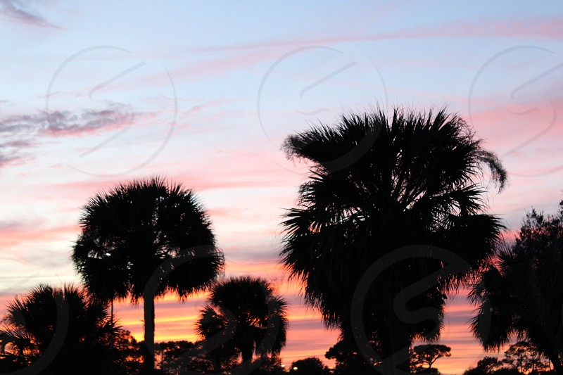 The Beautiful sunsets of Florida photo
