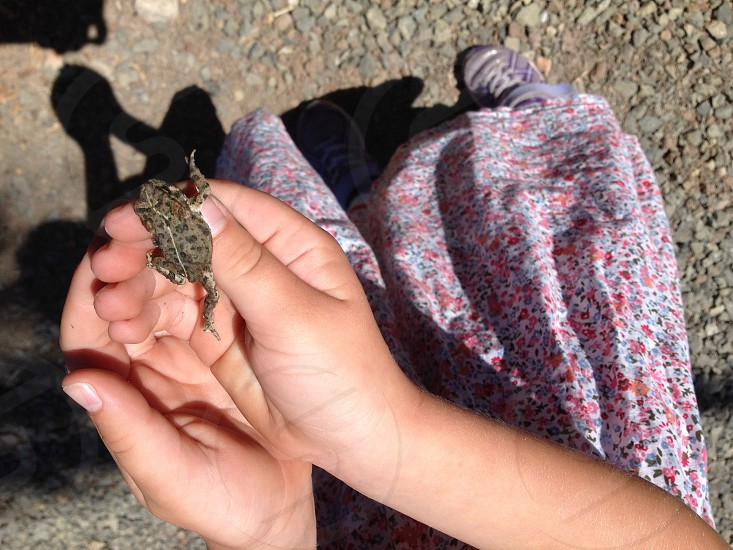 childs hands holding frog photo