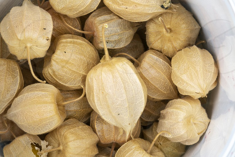 Pile of fruits called phisalis create a yellow background photo