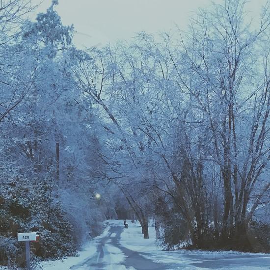 Winter Trees Kentucky Snow Roads Frozen photo