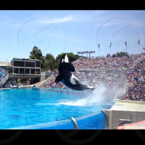 SeaWorld California  photo
