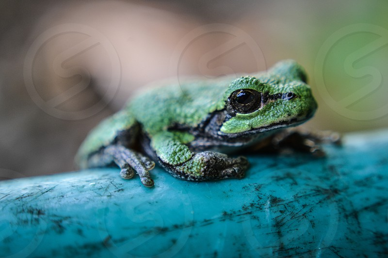 green and black dart frog in tilt shift lens photography photo